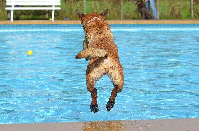 skok psa za míčkem