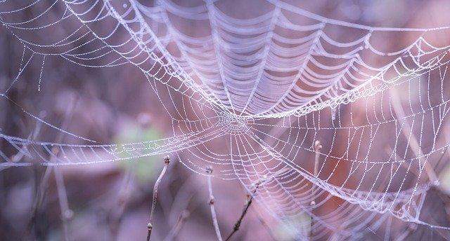 detail pavučiny